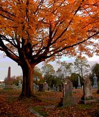 Sunset on the Cemetery - East Greenwich, Rhode Island (misterfoto) Tags: sunset tree fall cemetery maple rhodeisland eastgreenwich