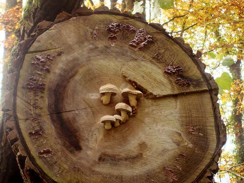 Pilze am Holzquerschnitt