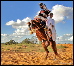 Il Cavaliere ! (Bashar Shglila) Tags: horse clouds il libya tripoli rider bianco ohhh sidi cavaliere libia libyen    lbia libi libiya liviya libija saih     lbija  lby libja lbya liiba livi