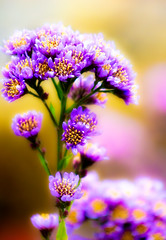 Some More Flowers (alan shapiro photography) Tags: flowers fall colorful blossom bokeh exploring bloom canonrebel 2009 wandering roaming alanshapiro wonderfulworldofflowers vosplusbellesphotos ashapiro515 canonrebelt1i 2010alanshapiro alanshapirophotography wwwalanwshapiroblogspotcom 2010alanshapirophotography