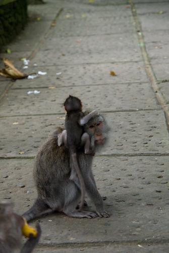秋天,我們的峇里島-猴子森林