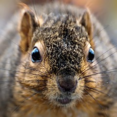 """In your face..."" (Images by John 'K') Tags: rain garden squirrel december critter explore photoaday 2009 soe johnk explored d5000 impressedbeauty johnkrzesinski randomok"