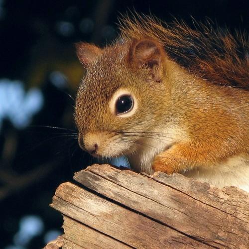 Squirrel Plea