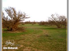 الفيضة (Abo-Mobarak) Tags: بر بدوي اشجار طبيعة ربيع صحراء عشب نبات الصمان بادية سدر فيضة طلح أبومبارك الفيضة