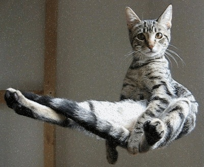 levitating-cat-thumb-400x328-29187