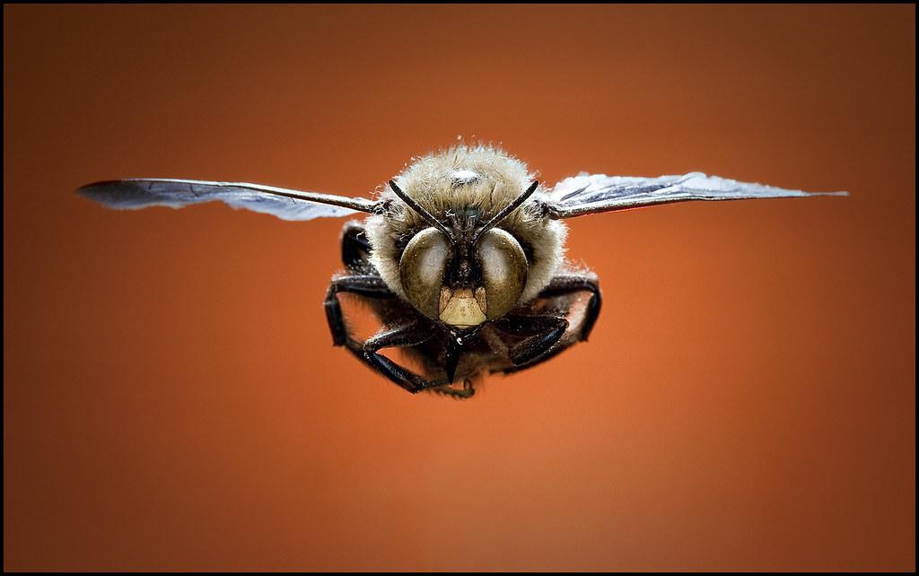 10/365: Iron Bee