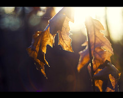 A New Beginning... (darth_bayne) Tags: bokeh canon350d sunflare 50mm18 forlife lateautumn anewyear anewbeginning darthbayne wwwmerantusenordse
