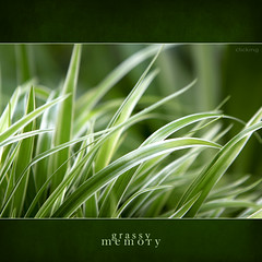 grassy memory - [ EXPLORED ] (-clicking-) Tags: lighting light macro green nature beautiful grass leaves closeup leaf natural plan fresh foliage zen memory grassy naturesfinest foliar topseven 100commentgroup artofimages bestcapturesaoi elitegalleryaoi