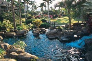 Kamaole Sands Pond, Kihei, Maui