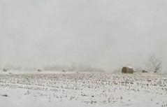 Winter Cornfield (12Jeepgirl~Never look back...) Tags: winter snow texture field rural photoshop landscape cornfield nikon midwest farm sigma iowa adobe bales lightroom d300 cs4 skeletalmess