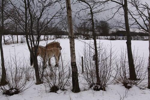 Horses + Winter