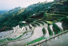 Banaue Rice Terraces by Sahlee C. Camposano