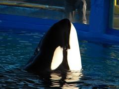Miami Sea Aquarium (Jose Alarco) Tags: demobileme