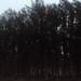 cox dawn mist trees