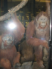 DSCF3551 (Phil D-UK) Tags: animals tring naturalhistorymuseum rothschild