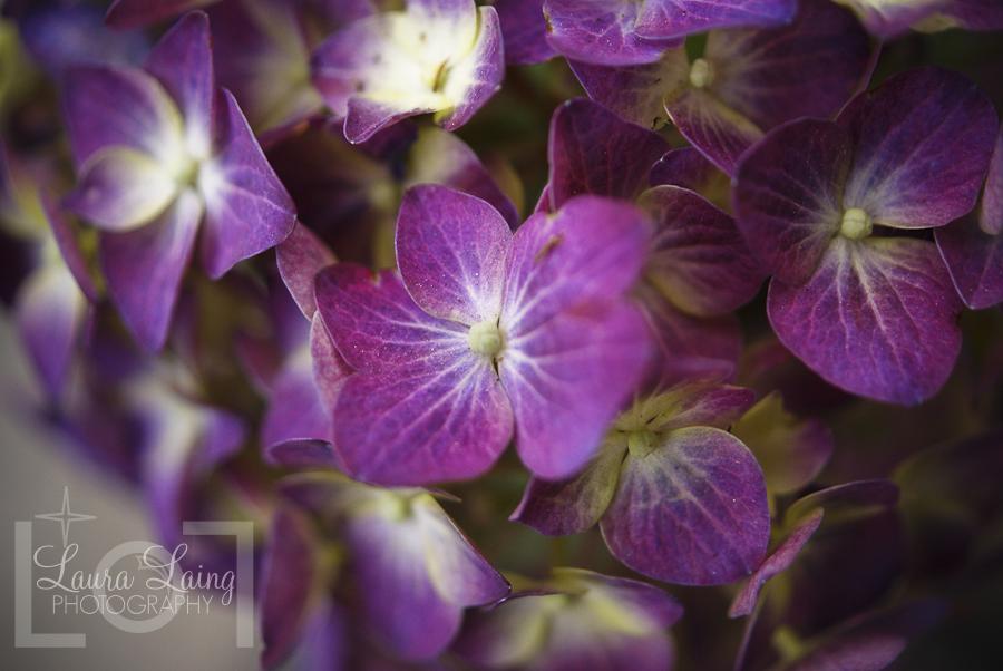 flowers005