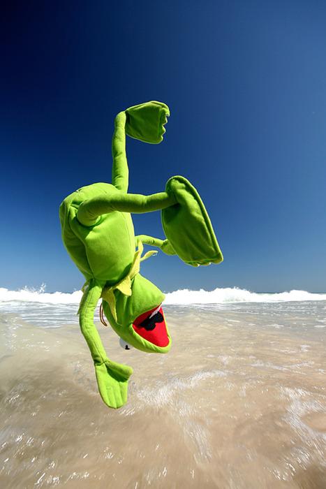 rana en la playa