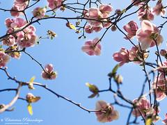 Yalta_spring_08