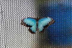 baudchon-baluchon-mindo-papillons-22