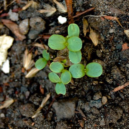 garden: week one