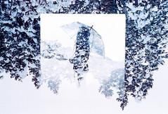 Umbrella Quartz (Hayden_Williams) Tags: umbrella winter cold evergreen alps japan takayama trees snow ice white girl person shadow figure silhouette doubleexposure multipleexposure surreal dream dreamy film analog fd50mmf18 hood frozen