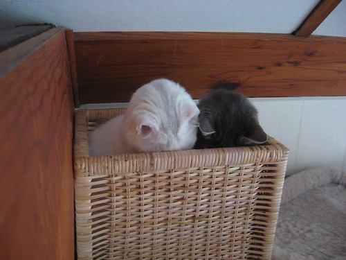 Mr. Bell and Mr. Shadow sitting side by side in a square basket. The basket is high enough that only their upper bodies are showing, and they are both looking down intently into the basket.