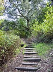 Wooded stairs (edwinsail) Tags: northerncalifornia path tildenpark yanaedwinmurphy foreststairway