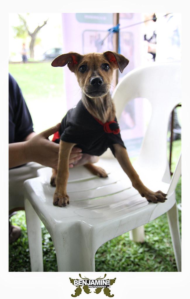 dog_adopt2