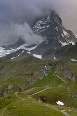 Ominous (Jeff Pang) Tags: morning sun switzerland sheep zermatt matterhorn mattertal