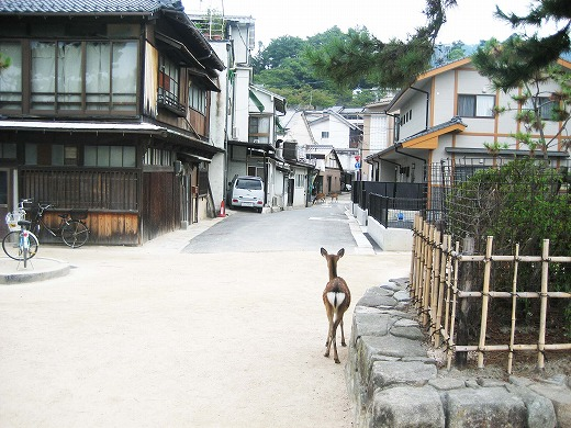 Travel to Miyajima 3
