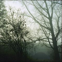 (Friedel Callies) Tags: fog nebel kodak münster yashicamat124g kü 160cn tequalilla
