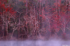 Blackwater River Mist (DanielEwert) Tags: autumn trees red mist color art fall nature leaves fog sunrise river landscape photography photo leaf florida daniel south fine best blackwater ewert