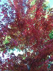 Fall Colors Boulder   DSCN0281