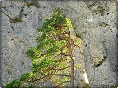 Lumineux (Domi Rolland ) Tags: france nature europe soe aveyron midipyrénées caussenoir