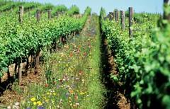 Argentina ocupa uno de los primeros lugares en la producción orgánica mundial