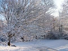 Snow_12609