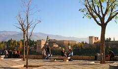 Portrait of a Tree!  Better viewed large if you have time. (MarsW) Tags: spain palace espana moorish granada laalhambra miradordesannicolas tierraroja anawesomeshot citrit