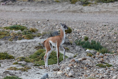 baudchon-baluchon-descente-patagonie-36