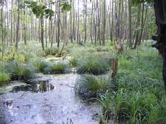 Wet Woodland near Ruda Zmigrodska (EuCAN Community Interest Company) Tags: poland 2009 eucan milicz baryczvalley