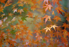 Taiyuin-byo: Autumn (jpellgen) Tags: november autumn tree fall grave leaves japan japanese leaf maple nikon shrine asia tomb momiji mausoleum  nippon nikko nikkor shinto 2009 nihon tochigi kanto  tokugawa d40  taiyuin tokugawaiemitsu