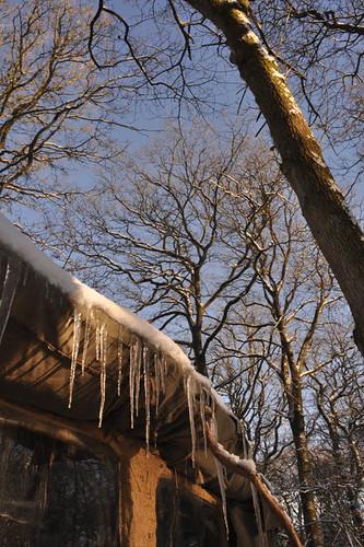 trees, canvas,ice