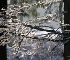 (:Linda:) Tags: germany ast village hoarfrost thuringia twig raureif icecrystal zweig rauhreif brden