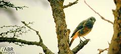Shy Bird (photography AbdullahAlSaeed) Tags: camera wood bird look del canon de la photo madera zoom photos south shy aves fotos saudi arabia sur 300 peel habla   unnecessary  cmara buscar naves arabias   necesita    saudita 50d        cortezas       innecesaria      habla50d300
