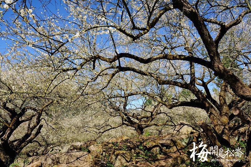 梅開烏松崙  (31).jpg
