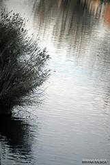 COLECCION REFLEJOS (Aysha Bibiana Balboa) Tags: paisajes paris flores grancanaria mar sevilla árboles granada nubes tenerife atardeceres marruecos dunas reflejos laponia desiertos efectosedaegipto turauia lanzaroteamanecer