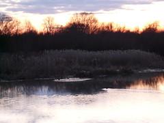 Sunset at Brandon Marsh. P1200804 (Joy Shakespeare) Tags: uk sunset landscape coventry westmidlands brandonmarsh warwickshirewildlifetrust