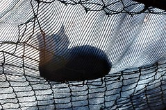 Cat's Cradle (Gali-Dana) Tags: shadow net cat jerusalem shade        galidana