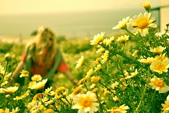 fields of daisies (cbettsphotography) Tags: ocean life pink flower green love nature girl yellow daisies garden greek fly crazy heaven mediterranean peace blossom gardening live dream mother seed free greece blonde daisy pauline existence purity