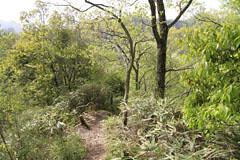 御前山の下り道