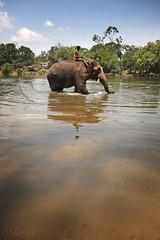 Getting ready for bath (Light and Life -Murali ) Tags: india elephant water karnataka dubare mg3370p1sc